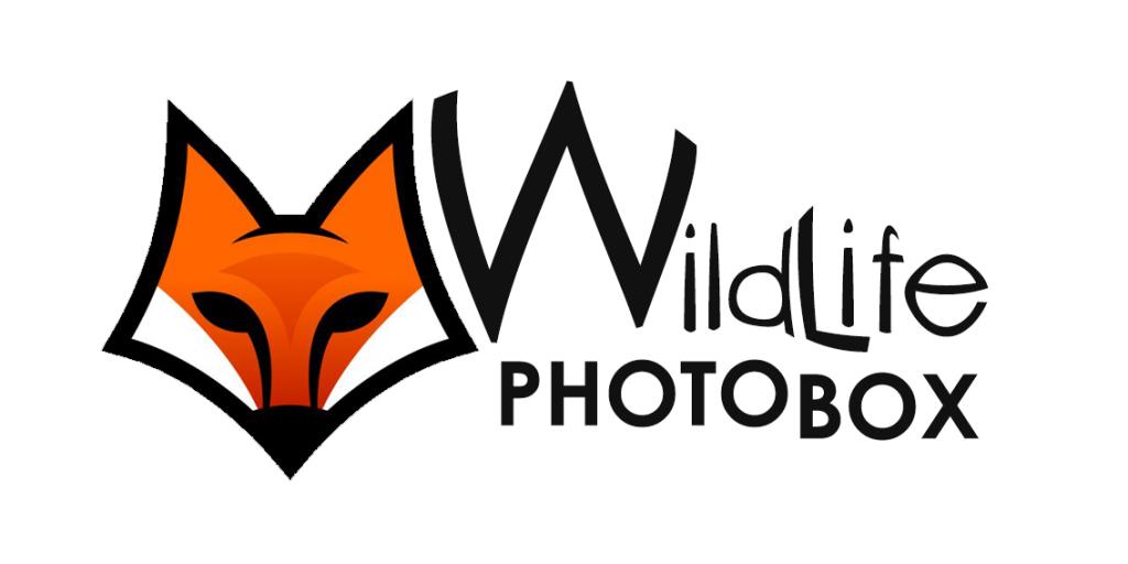 16de5f8dd1ffe99f9e169a0605a960b3--book-logo-logo-designing